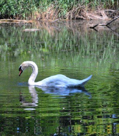 Príroda v Petržalke. Spoznaj svoje okolie